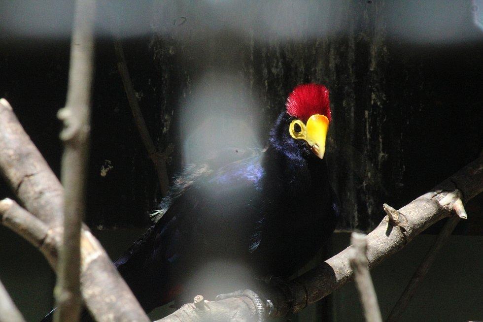 Lidé si mohou prohlédnout zvířata ve venkovních výbězích či voliérách. Zoo Hodonín