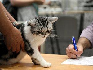 Hotel Voroněž zaplnily desítky koček. Od soboty do neděle je budou posuzovat odborníci.