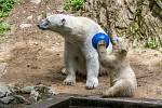 Lední medvědi v brněnské zoo.