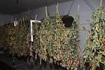 Policisté odhalili pěstitele konopí.