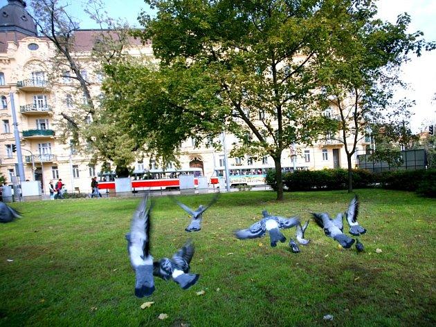 Park na Konečného náměstí v Brně.