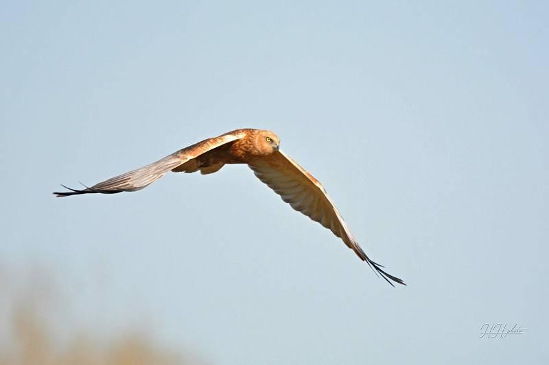 Zachycení ptáků v přírodě je pokaždé plné překvapení. Na snímku je moták pochop.