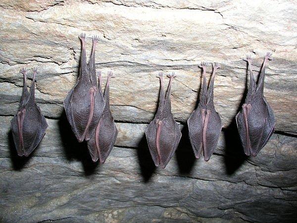 Místo je chráněné i kvůli zimovišti netopýrů.
