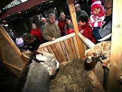 Vánoční trhy na náměstí Svobody a Zelném trhu v Brně.