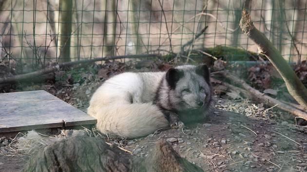 Zvířecí obyvatelé brněnské zoo i její návštěvníci si užívali prosluněný únorový víkend.