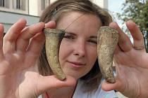 Brněnští archeologové objevili na dně Brněnské přehrady pozůstatky starobylé kultury.