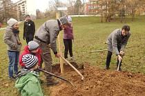 Minulý víkend vysadili dobrovolníci se zástupci radnice Brna-severu více než dvacítku ovocných stromů pod školou v Milénově ulici v brněnské Lesné. Oživí původní ovocný sad.