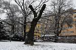 V pátek ráno v Brně napadl sníh, brzy se však začal rozpouštět.