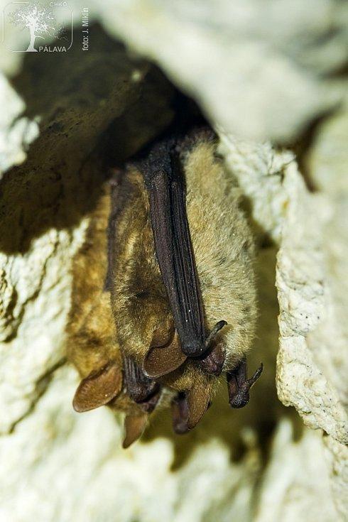 Jeskyně Na Turoldu.