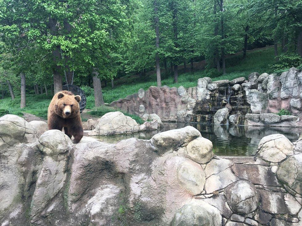V Brněnské zoologické zahradě oslavili mezinárodní den medvědů