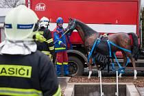 Jak vytáhnout koně z propasti a nezranit jej se v úterý učili hasiči Jihomoravského a Libereckého kraje v brněnském Školním a výcvikovém centru. Obě jednotky totiž dostaly novou výbavu, záchrannou síť.