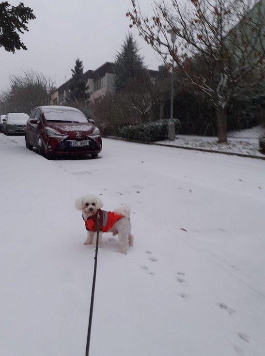"""""""...my jsme nadšení :-D Když už musí být zima, tak se sněhem ;-) Zdravíme z Kohoutek :-)"""""""