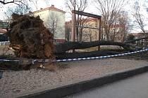 Na dětské hřiště v královopolské Šelepově ulici se kvůli silnému větru zřítil vzrostlý strom.