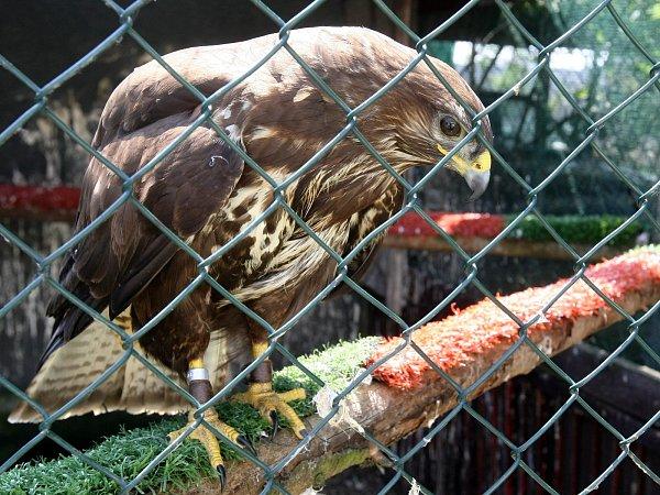 Lidé Zdeňku Machařovi do stanice nazvané Ptačí centrum nyní předávají idvacet zvířat denně