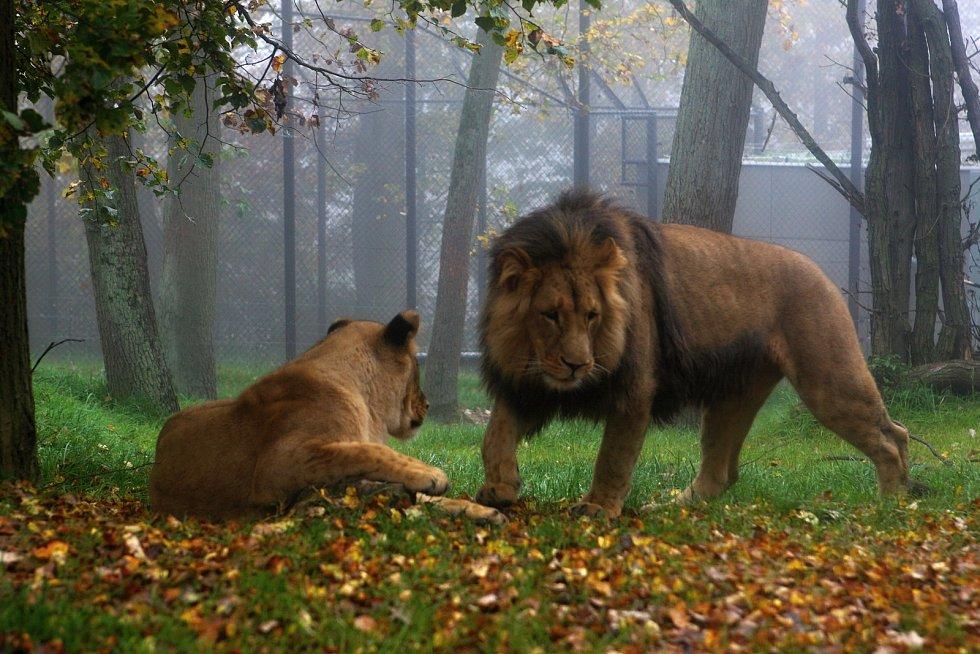 Brněnská zoologická zahrada.