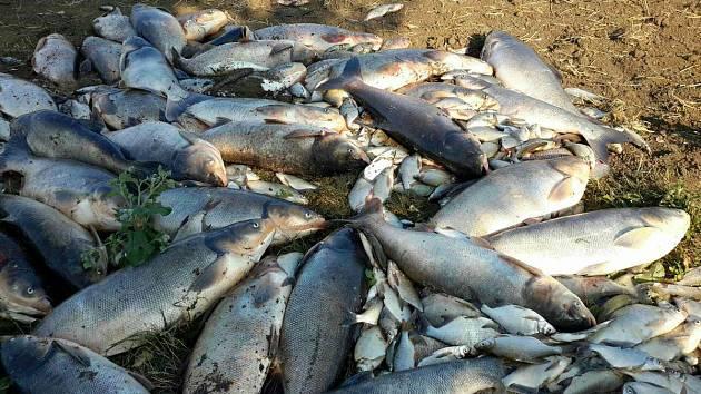 Úhyn ryb u Ponětovického rybníka
