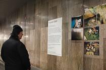 Podchod na brněnském hlavním vlakovém nádraží zaplnila výstava fotografií. Jejich autory jsou bezdomovci, které oslovila studentka výtvarných umění.