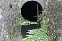 Ke znečištěnému potoku bílou barvou v brněnském Komíně vyjeli hasiči.