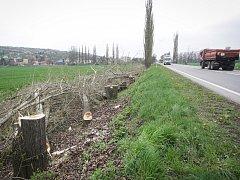 Pracovníci Povodí Moravy v okolí řeky Litavy mezi Židlochovicemi a Měnínem vykáceli stovky dřevin, i vysoké stromy.