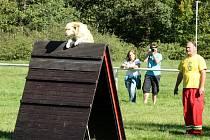 Mistrovství republiky záchranných psů.