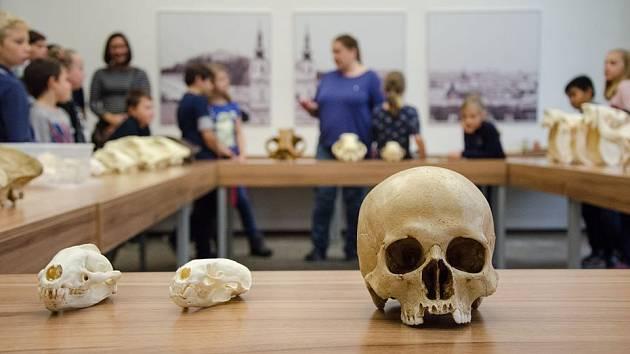 Archeologický ústav AV ČR v Brně pořádá Den otevřených dveří.