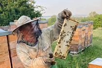 Počasí a stále více pesticidů v polích snižuje úrodu medu. Včelaři zdražují.