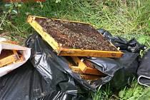 Včely někdo vyhodil ke kontejnerům.