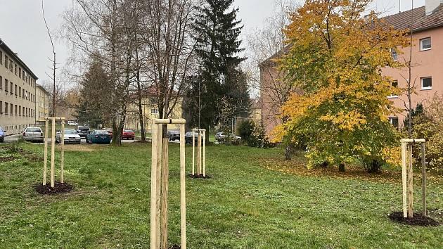 Nová výsadba v Husově čtvrti v Rosicích.
