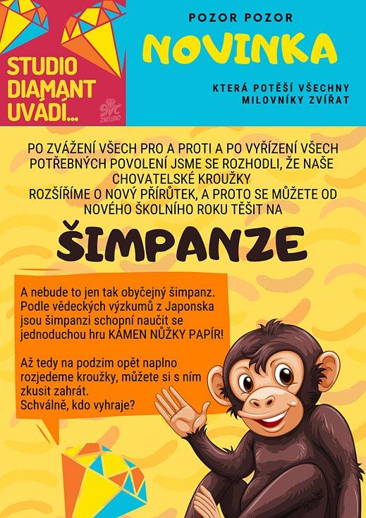 Ve znojemském středisku volného času budou mít šimpanze. Takovou novinku ohlásili na apríla... Foto: Facebook/ Středisko volného času Znojmo