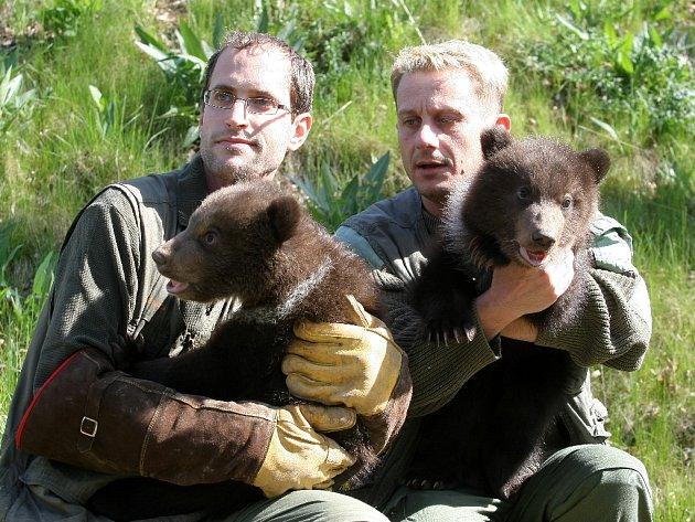 Po čipovaní mají chovatelé brněnské zoologické zahrady jasno. Obě kamčatská medvíďata jsou kluci.