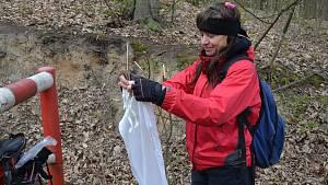 Bioložka Alena Žákovská ve čtvrtek nasbírala dvaatřicet klíšťat u cesty v lese za Anthrkoposem.