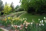 Výstava kosatců v Botanické zahradě a arboretu brněnské Mendelovy univerzity.