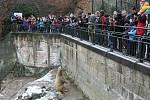Krmení medvědů v brněnské zoo.