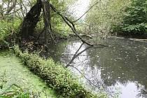 Vodní systém na Černovickém potoce mezi brněnskými Holáskami a Ivanovicemi.
