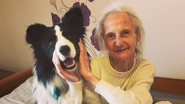Znojmo sníží poplatek za psa invalidním důchodcům. I díky článku Deníku Rovnost