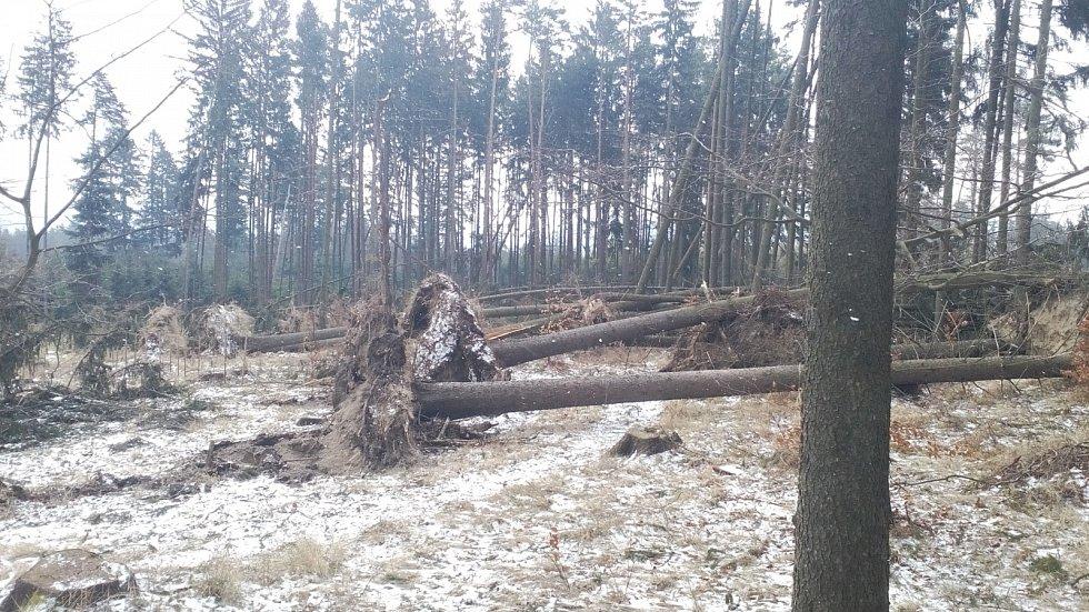 Škody od větru v brněnských lesích