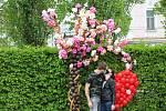 První máj u rozkvetlé balónkové třešně v parku na Slovanském náměstí v brněnském Králově Poli.