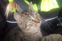 Strážnice zachránila kotě před auty. Odjelo schoulené v její náruči