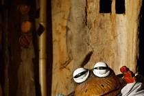 Loutky žabáků ze dřeva a kůry výtvarníka Antonína Maloně připomínají spíše nohaté maňásky.