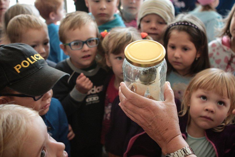 Různé druhy hub si mohli návštěvníci prohlédnout v pondělí na výstavě hub v brněnských Vinohradech, kterou členové mykologického klubu pořádali již poosmé.
