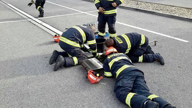 Káčata osvobodili z kanálu v Modřicích až hasiči. Pak je odnesli do přírody