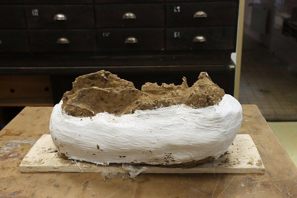 Šedesáticentimetrovou čelist v pátek převzali vědci z Moravského zemského muzea, kde ji v brněnském Anthropose dále prozkoumají.