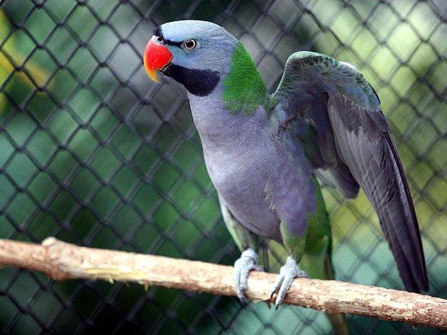 Výstava exotického ptactva v brněnské botanické zahradě.