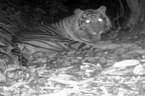 Od roku 2009 se Jeglík snaží chránit tygry, orangutany, slony a další ohrožená zvířata na indonéském ostrově Sumatra. Založil neziskovou organizaci Prales dětem, která vykupuje džungli při hranici národního parku, aby pytlákům ztížili přístup do pralesa.