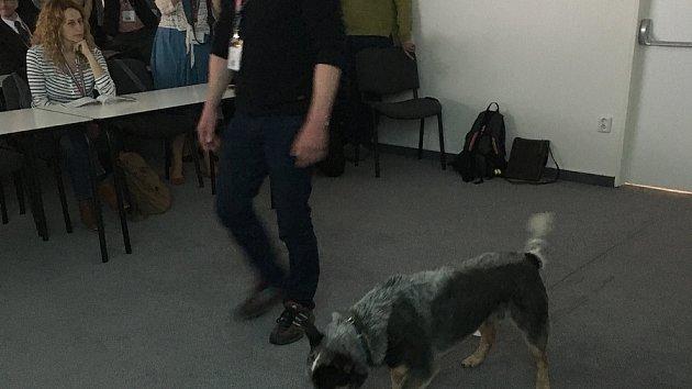Psi vyčmuchají nádory vaječníků a plic