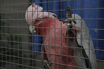 Výstava papoušků a drobného exotického ptactva v Petrově.