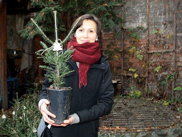 Brňané si od pondělí mohou zakoupit vánoční stromy v květináčích. Cílem projektu Vánoční stromky – stromky pro život je podpořit návrat jedly bělokoré do přírody.
