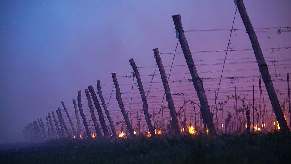 V úterý 7. května zástupci Vinařství Šebesta zapalovali svíce, aby uchránily své vinohrady v Březí před mrazem.