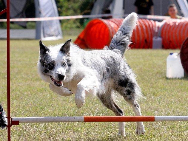 Závody v psích sportech hostilo o tomto víkendu Brno.