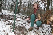Psi, kteří zabíjeli v brněnské zoo, se podhrabali do areálu pod tímto plotem.